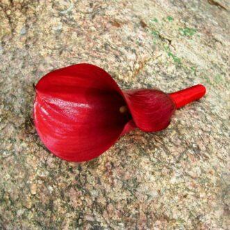 Бутоньерка из красной каллы