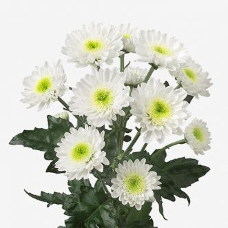 Кустовые хризантемы поштучно